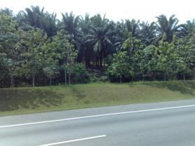 Foto della strada tra la Malesia e Singapore