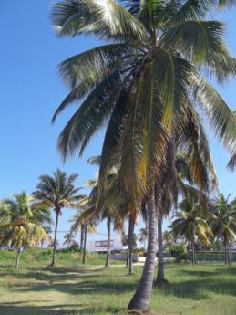 Foto di Playa del Este (palme)