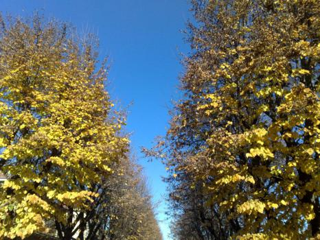 Foto di Vercelli (Alberi in zona Parco Kennedy)