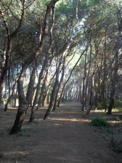 Foto di Pescara