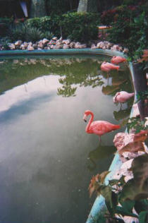Foto di Playa Santa Lucia (fenicotteri rosa)