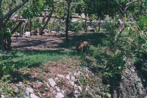 Foto di Xcaret (giaguaro)