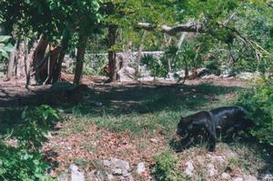 Foto di Xcaret (giaguaro e pantera nera)