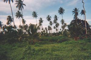 Foto di Zanzibar (paesaggio)