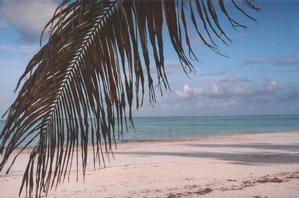 Tanzania, foto di Zanzibar (Bwejuu)
