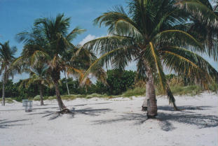 Foto di Miami (Key Biscayne)