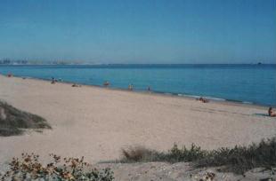 Guarda le foto di El Saler