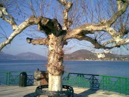 Foto di Arona (NO) -lungolago-