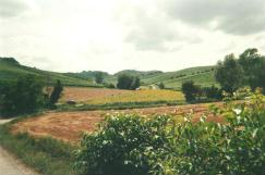 Foto del Monferrato (AL)