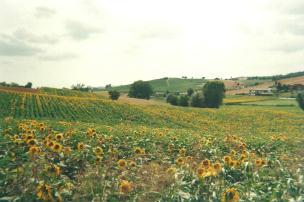 Foto del Monferrato (AT) -Cioccaro-